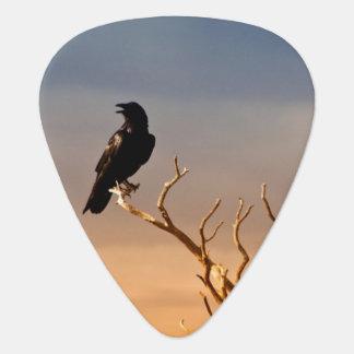 Médiators Raven sur les branches d'arbre ensoleillées,