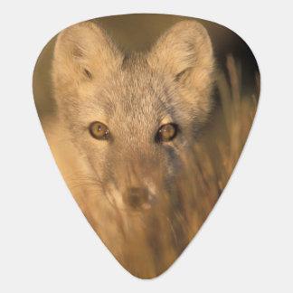 Médiators renard arctique, lagopus d'Alopex, sur les 1002 2
