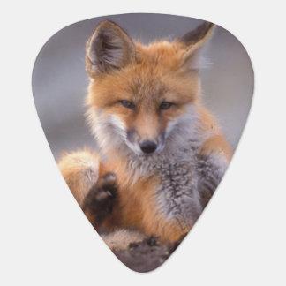 Médiators renard rouge, vulpes de Vulpes, chiot se rayant,