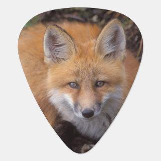 Médiators renard rouge, vulpes de Vulpes, dans des couleurs