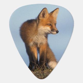 Médiators renard rouge, vulpes de Vulpes, dans les 1002