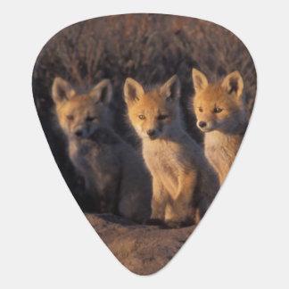 Médiators renard rouge, vulpes de Vulpes, kits en dehors de