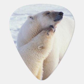 Médiators Truie d'ours blanc avec l'petit animal, banquise