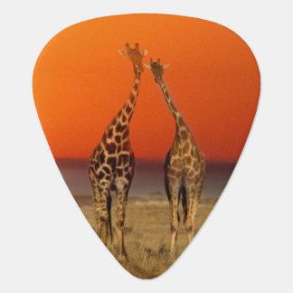 Médiators Un couple de girafe entre dans le coucher du