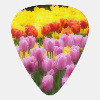 Médiators WA, vallée de Skagit, jardin de tulipe de