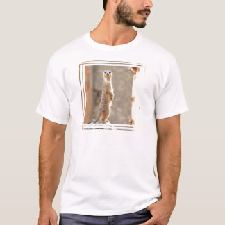 Meerkat au T-shirt des hommes d'attention