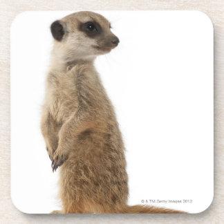 Meerkat ou Suricate - suricatta de Suricata Dessous-de-verre