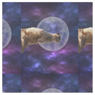 Meerkat sur la montre de nuit bleue de clair de tissu