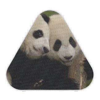 Melanoleuca d Ailuropoda de bébés de panda géant