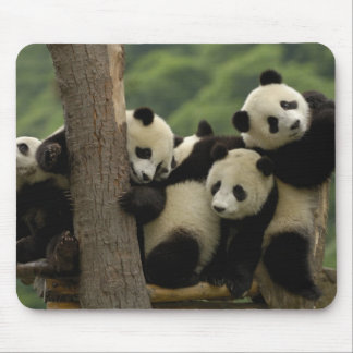 Melanoleuca d Ailuropoda de bébés de panda géant Tapis De Souris