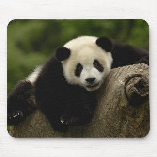 Melanoleuca d'Ailuropoda de bébé de panda géant) 1 Tapis De Souris