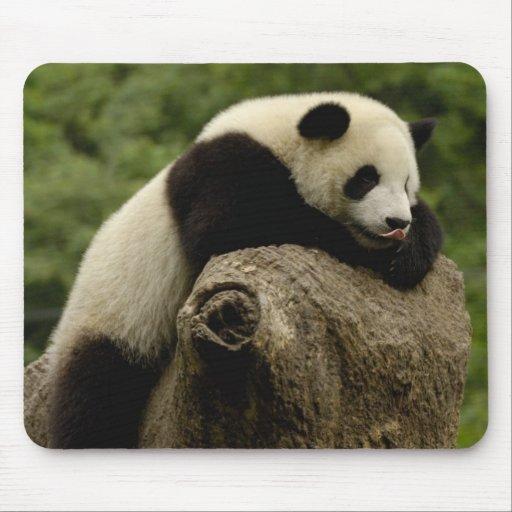 Melanoleuca d'Ailuropoda de bébé de panda géant) 2 Tapis De Souris