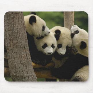Melanoleuca d'Ailuropoda de bébé de panda géant) 4 Tapis De Souris