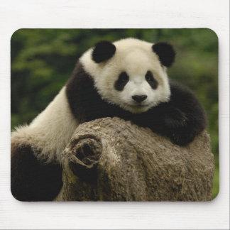 Melanoleuca d'Ailuropoda de bébé de panda géant) 7 Tapis De Souris