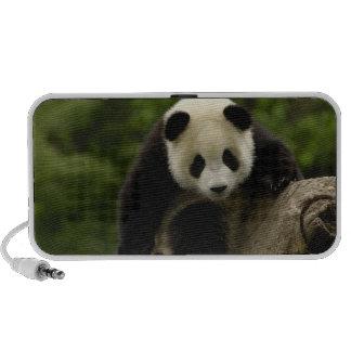 Melanoleuca d'Ailuropoda de bébé de panda géant) 9 Haut-parleurs