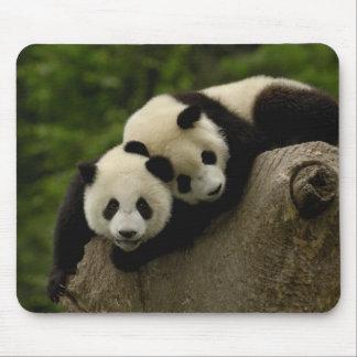 Melanoleuca d'Ailuropoda de bébés de panda géant)  Tapis De Souris