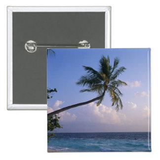 Mer et palmier pin's