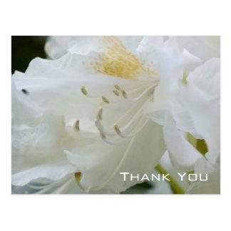 Merci blanc du rhododendron | carte postale