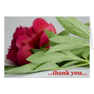 … merci… carte de vœux