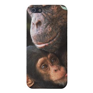 Mère de chimpanzé entretenant le bébé coques iPhone 5