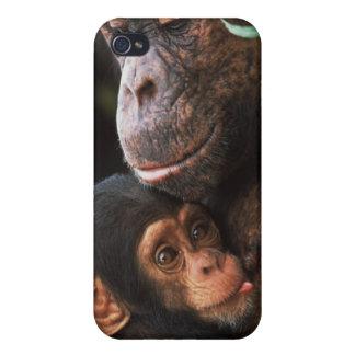 Mère de chimpanzé entretenant le bébé étui iPhone 4