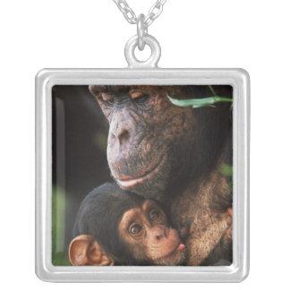 Mère de chimpanzé entretenant le bébé pendentif carré