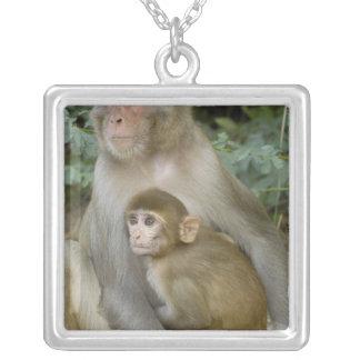 Mère et bébé de mulatta de Macaca de Macaques de Pendentif Carré