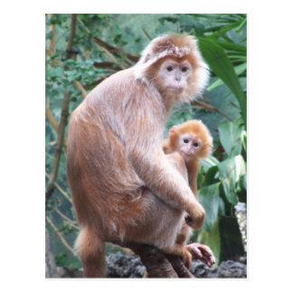 Mère et bébé de singe de Langur Carte Postale