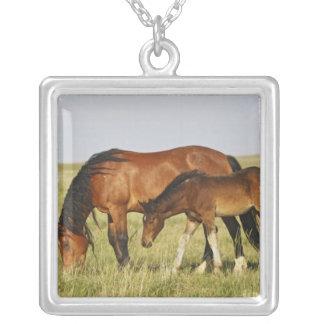 Mère sauvage de cheval sauvage de caballus d'Equus Collier