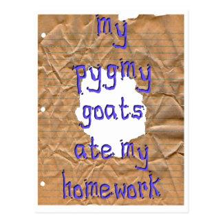 Mes chèvres pygméennes ont mangé mon travail carte postale