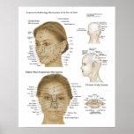 Microsystèmes de visage et de tête de réflexothéra affiche