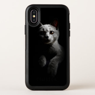 Mignon superbe de chaton de chat de pli d'écossais