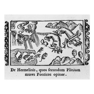 Migration des lemmings carte postale