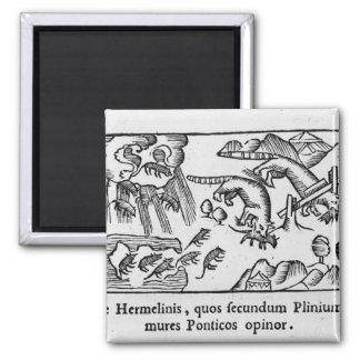 Migration des lemmings magnet carré