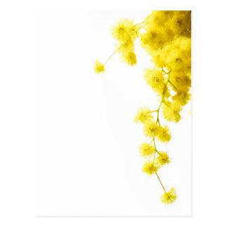Mimosa Carte Postale