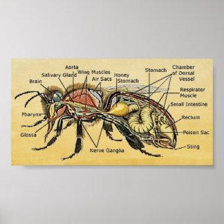 Mini affiche d'abeille de miel posters