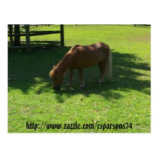 Mini carte postale de cheval