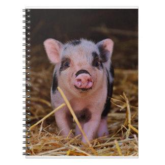 mini porc carnet