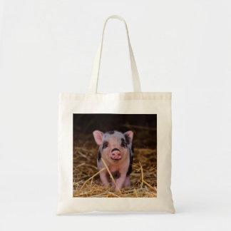 mini porc sac