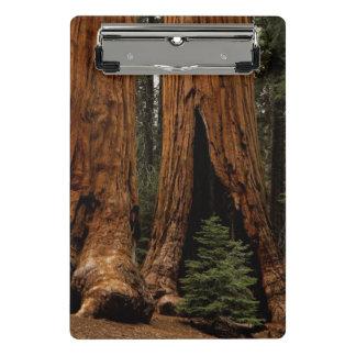 Mini Porte-bloc Arbres de séquoia, parc national de séquoia