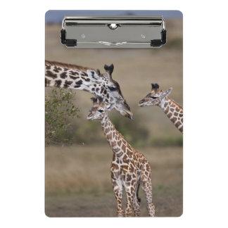 Mini Porte-bloc Girafe de Maasai (girafe Tippelskirchi)