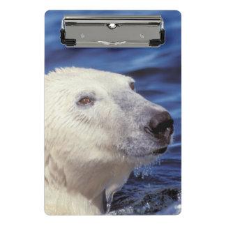 Mini Porte-bloc L'Amérique du Nord, cercle arctique. Ours blanc