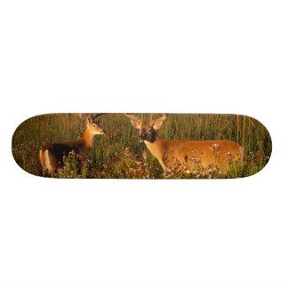 Mini Skateboard 18,4 Cm L'Amérique du Nord, Etats-Unis, Montana, bison