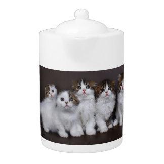 Minous dans une théière de porcelaine de rangée