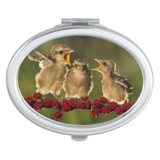 Miroir Compact Trois oiseaux de Schach de Lanius de bébé