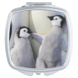 Miroir De Maquillage Poussin de pingouin d'empereur