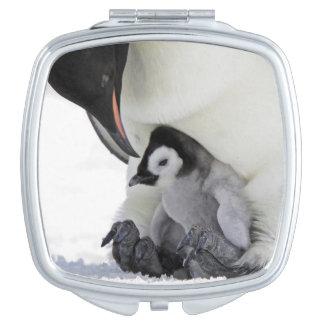 Miroir De Voyage Île de colline de neige du pingouin d'empereur |