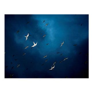 Miscellaneous - Arctic Tern & Blue Sky Pattern Carte Postale