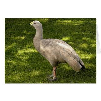 Miscellaneous - Cape Barren Goose  Shadows & Light Carte De Vœux