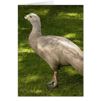 Miscellaneous - Cape Barren Goose  Shadows & Light Cartes